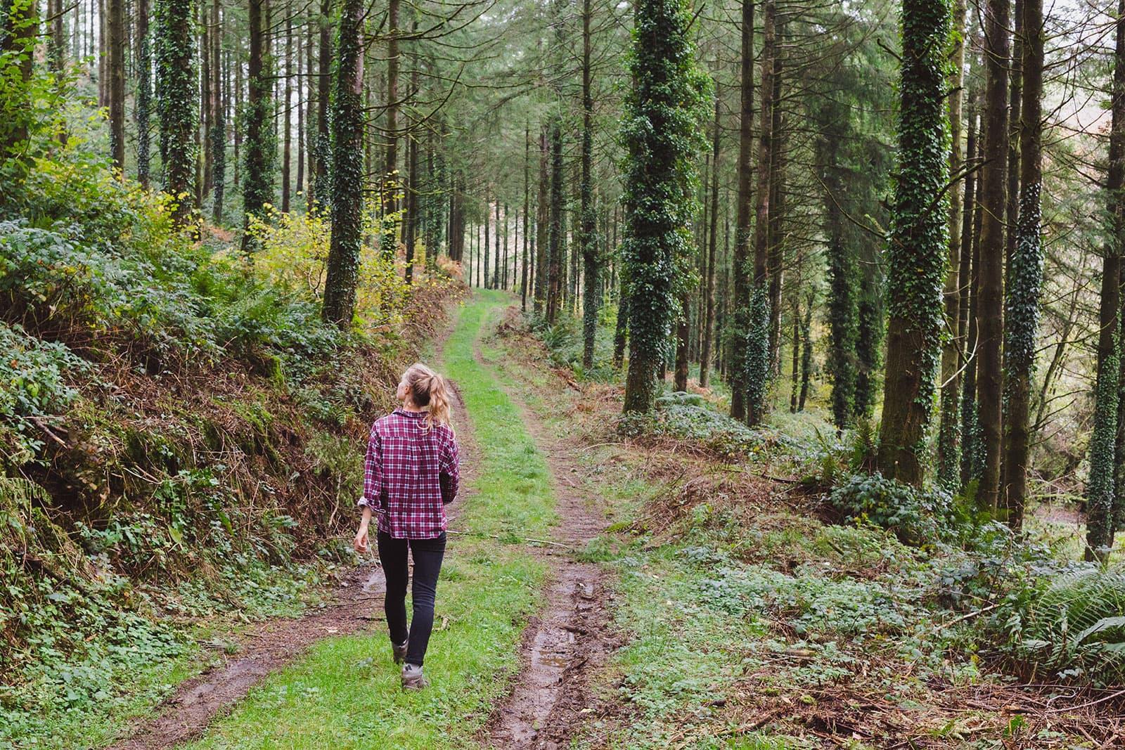 2.-Woodland-walk-web
