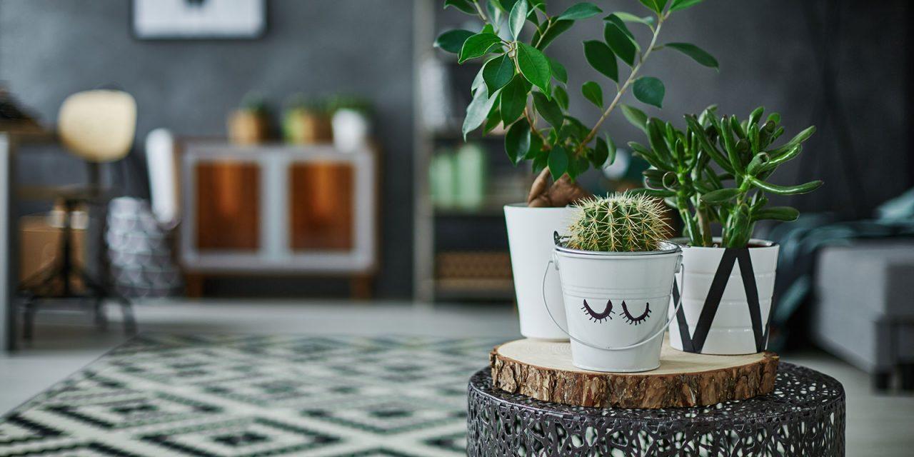 Plants in modern interior design