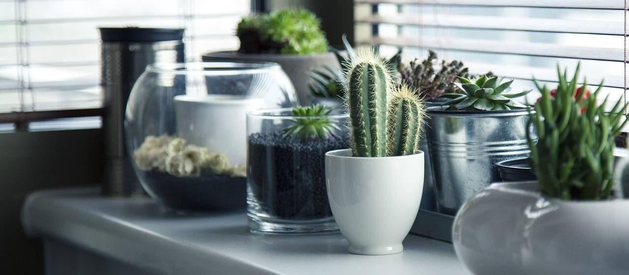 plants in modern interior design   Woodpecker flooring