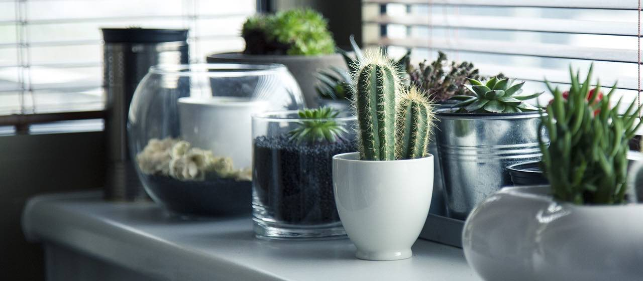 plants in modern interior design | Woodpecker flooring