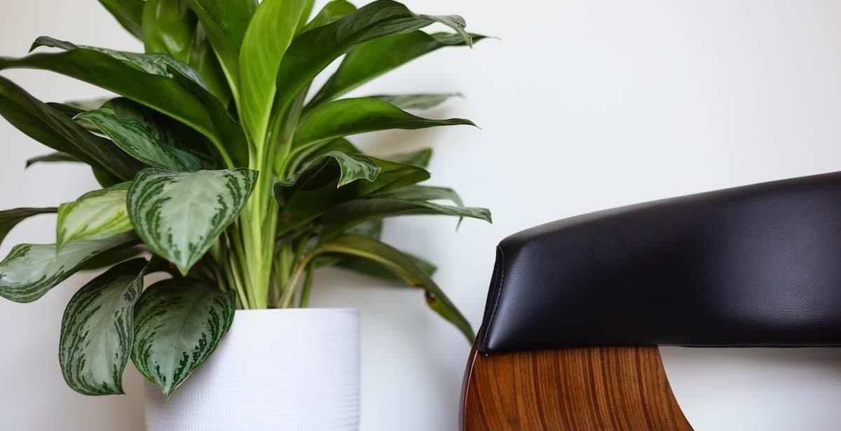 Plants in modern interior design 2