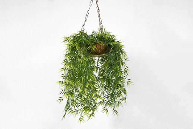 hanging plant 5