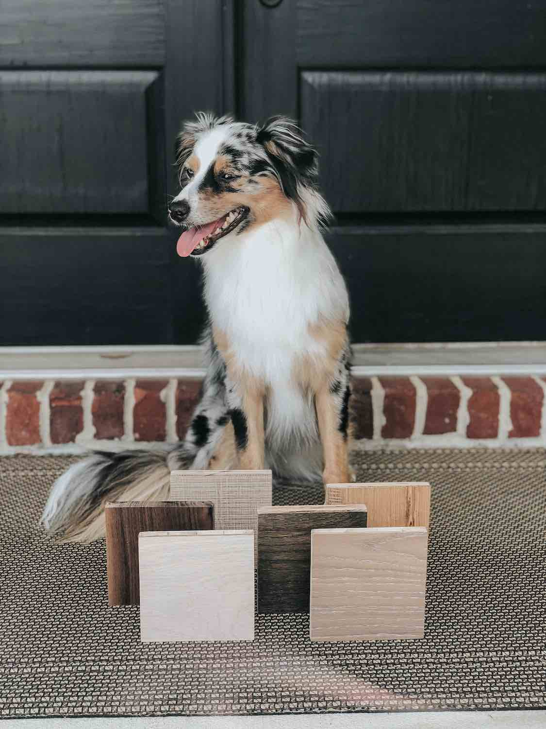 dog with wood samples